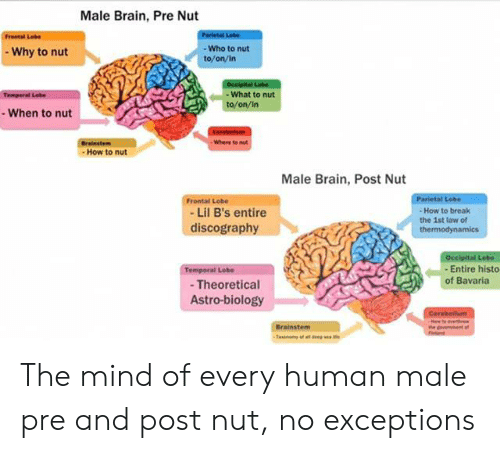 Male Brain Pre Nut Froetal Lee - Who to Nut Why to Nut