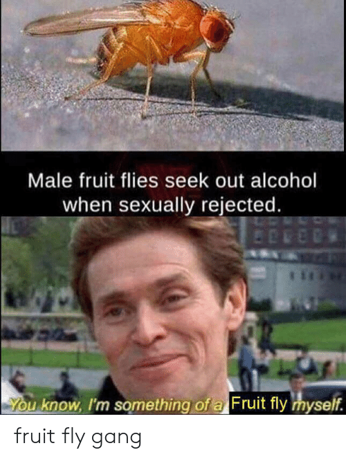 Male Fruit Flies Seek Out Alcohol When Sexually Rejected You