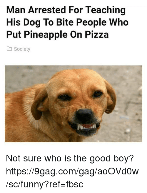 9gag, Dank, and Funny: Man Arrested For Teaching  His Dog To Bite People Who  Put Pineapple On Pizza  Society Not sure who is the good boy?  https://9gag.com/gag/aoOVd0w/sc/funny?ref=fbsc