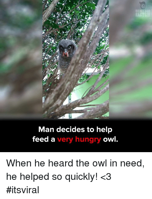 Hungry, Memes, and 🤖: Man decides to help  feed a  very hungry o When he heard the owl in need, he helped so quickly! <3 #itsviral
