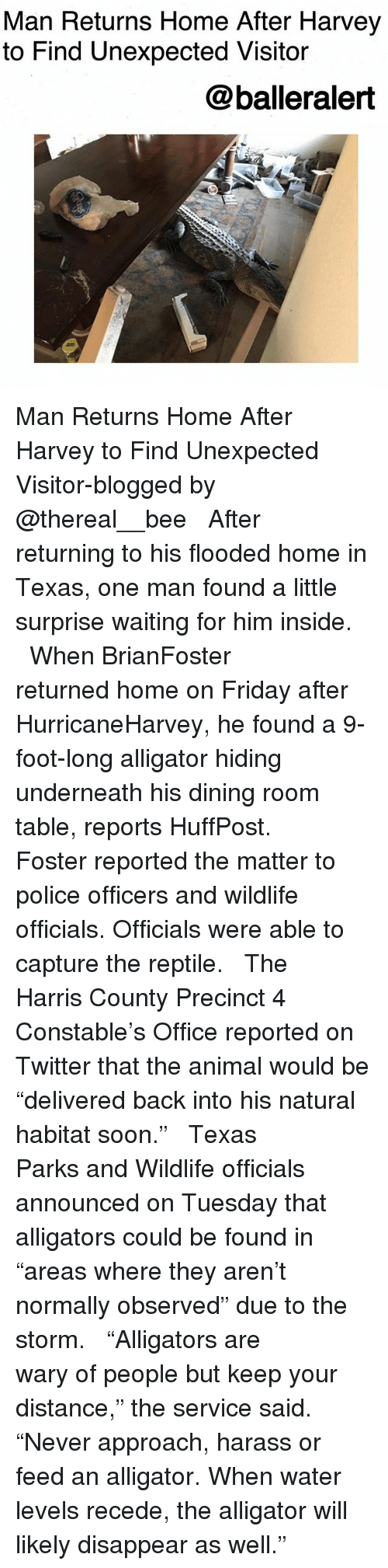 "Friday, Memes, and Police: Man Returns Home After Harvey  to Find Unexpected Visitor  @balleralert Man Returns Home After Harvey to Find Unexpected Visitor-blogged by @thereal__bee ⠀⠀⠀⠀⠀⠀⠀⠀⠀ ⠀⠀ After returning to his flooded home in Texas, one man found a little surprise waiting for him inside. ⠀⠀⠀⠀⠀⠀⠀⠀⠀ ⠀⠀ When BrianFoster returned home on Friday after HurricaneHarvey, he found a 9-foot-long alligator hiding underneath his dining room table, reports HuffPost. ⠀⠀⠀⠀⠀⠀⠀⠀⠀ ⠀⠀ Foster reported the matter to police officers and wildlife officials. Officials were able to capture the reptile. ⠀⠀⠀⠀⠀⠀⠀⠀⠀ ⠀⠀ The Harris County Precinct 4 Constable's Office reported on Twitter that the animal would be ""delivered back into his natural habitat soon."" ⠀⠀⠀⠀⠀⠀⠀⠀⠀ ⠀⠀ Texas Parks and Wildlife officials announced on Tuesday that alligators could be found in ""areas where they aren't normally observed"" due to the storm. ⠀⠀⠀⠀⠀⠀⠀⠀⠀ ⠀⠀ ""Alligators are wary of people but keep your distance,"" the service said. ""Never approach, harass or feed an alligator. When water levels recede, the alligator will likely disappear as well."""
