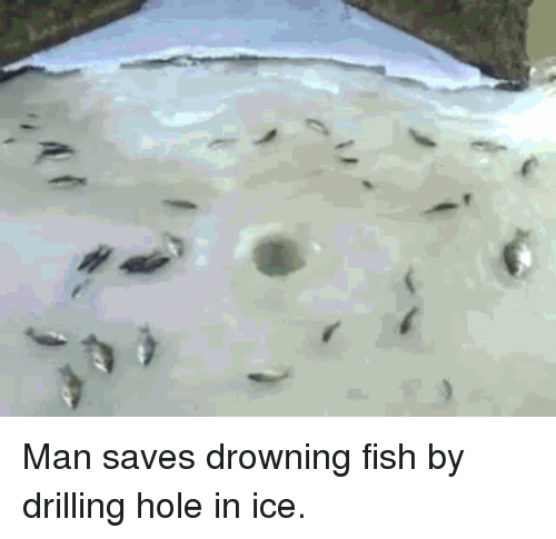 Fish, Misleading Captions, and Ice: Man saves drowning fish by drilling hole in ice.