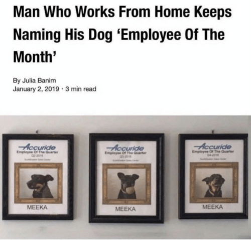 Home, Dog, and Who: Man Who Works From Home Keeps  Naming His Dog 'Employee Of The  Month'  By Julia Banim  January 2, 2019 3 min read  Accuride  Employse Of The Quarter  Accuride  Employee Of The Qurt  Employee Of The Quarter  MEEKA  MEEKA  MEEKA