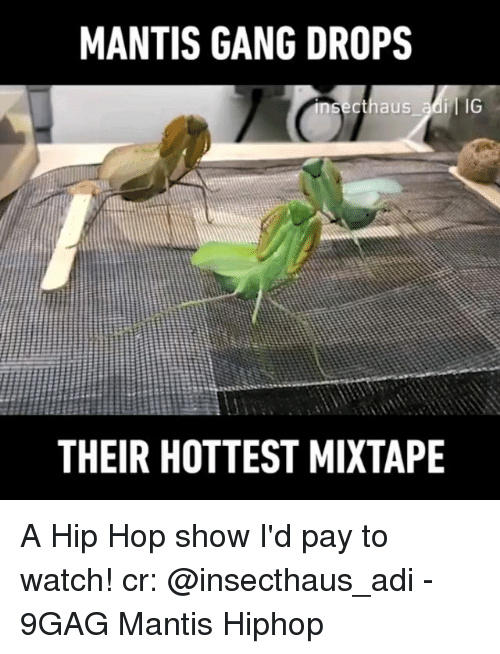 9gag, Memes, and Gang: MANTIS GANG DROPS  cthaus adi IG  THEIR HOTTEST MIXTAPE A Hip Hop show I'd pay to watch! cr: @insecthaus_adi - 9GAG Mantis Hiphop
