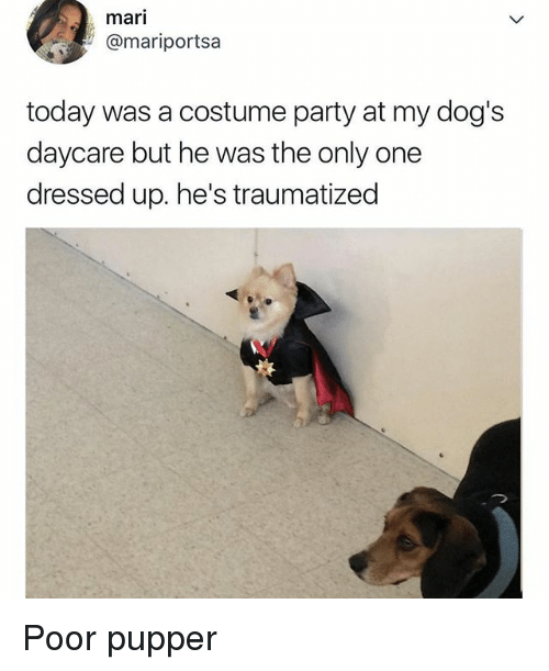 Dogs, Funny, and Party: mari  @mariportsa  today was a costume party at my dog's  daycare but he was the only one  dressed up. he's traumatized Poor pupper