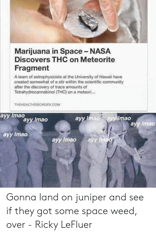 Community, Nasa, and Reddit: Marijuana in Space NASA  Discovers THC on Meteorite  Fragment  A team of astrophysicists at the University of Hawaii have  created somewhat of a stir within the scientific community  after the discovery of trace amounts of  Tetrahydrocannabinol (THC) on a meteori...  THEHEALTHDISORDER.COM  аyy Imao  ayy Imao  ayy Imao  ayy Imao  ayy Imao  ayy Imao  ayy Imao  аyy Imao Gonna land on juniper and see if they got some space weed, over - Ricky LeFluer