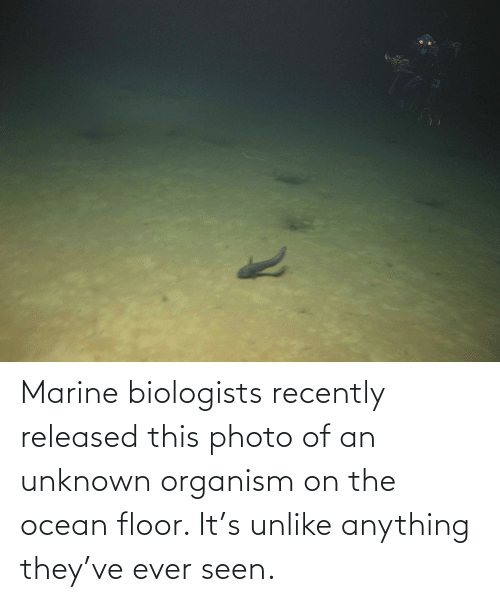 Ocean, Photo, and Unknown: Marine biologists recently released this photo of an unknown organism on the ocean floor. It's unlike anything they've ever seen.