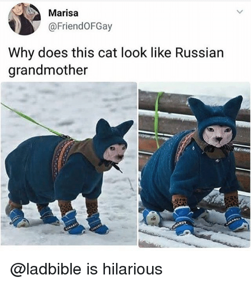 Funny, Hilarious, and Russian: Marisa  @FriendoFGay  Why does this cat look like Russian  grandmother @ladbible is hilarious
