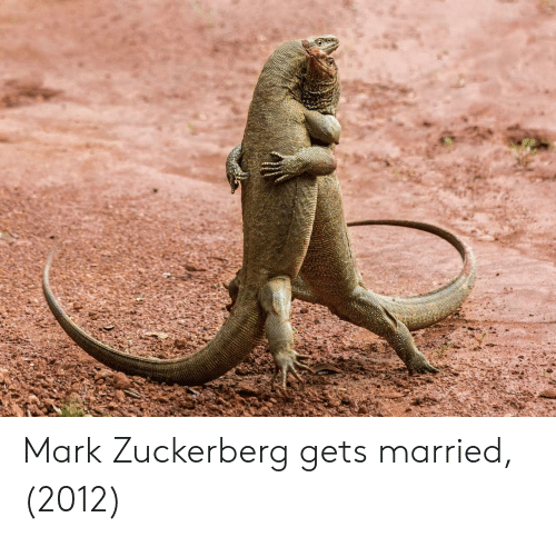 Mark Zuckerberg, Zuckerberg, and Mark: Mark Zuckerberg gets married, (2012)