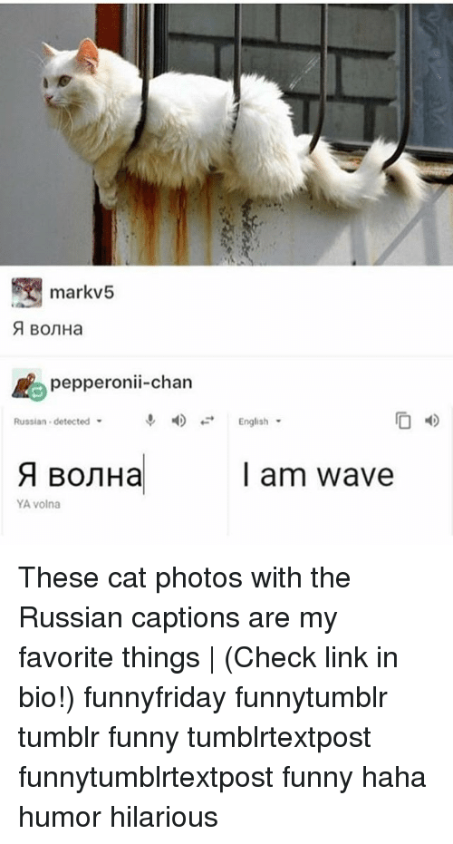 Funny, Memes, and Tumblr: markv5  pepperonii-chan  Russian detected  English  l am wave  YA volna These cat photos with the Russian captions are my favorite things | (Check link in bio!) funnyfriday funnytumblr tumblr funny tumblrtextpost funnytumblrtextpost funny haha humor hilarious
