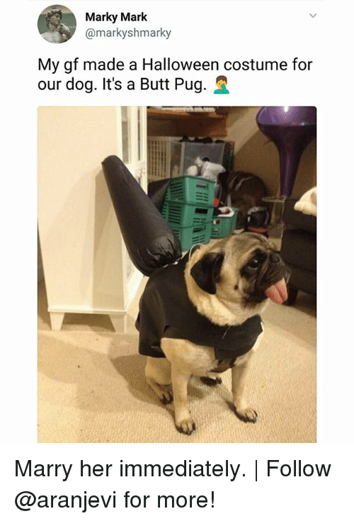 Butt, Halloween, and Memes: Marky Mark  @markyshmarky  My gf made a Halloween costume for  our dog. It's a Butt Pug. Marry her immediately.   Follow @aranjevi for more!