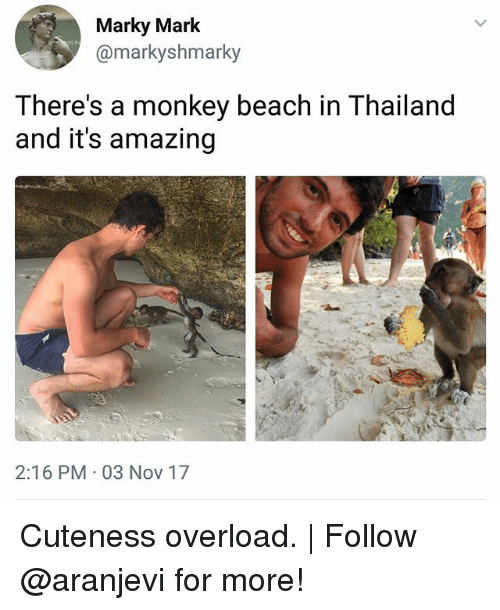 Memes, Beach, and Monkey: Marky Mark  @markyshmarky  There's a monkey beach in Thailand  and it's amazing  2:16 PM 03 Nov 17 Cuteness overload.   Follow @aranjevi for more!