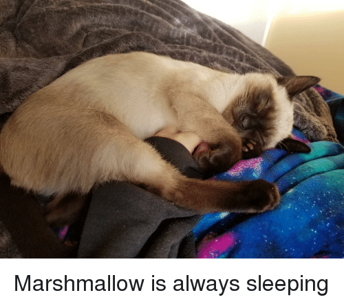 Sleeping on Marshmallows