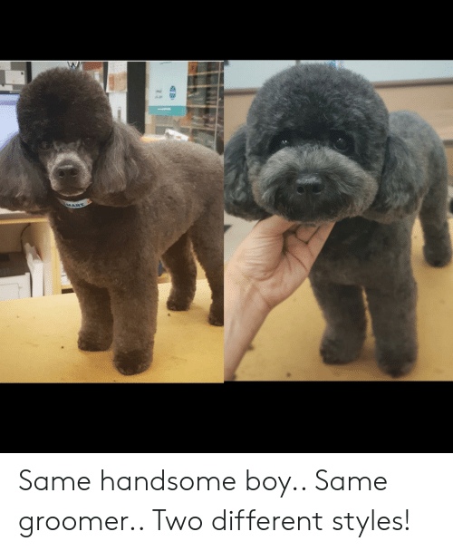 Boy, Handsome, and Different: MART Same handsome boy.. Same groomer.. Two different styles!