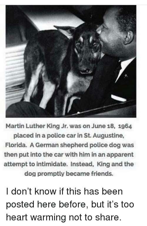 Friends, Martin, and Martin Luther King Jr.: Martin Luther King Jr. was on June 18, 1964  placed in a police car in St. Augustine,  Florida. A German shepherd police dog was  then put into the car with him in an apparent  attempt to intimidate. Instead, King and the  dog promptly became friends. I don't know if this has been posted here before, but it's too heart warming not to share.