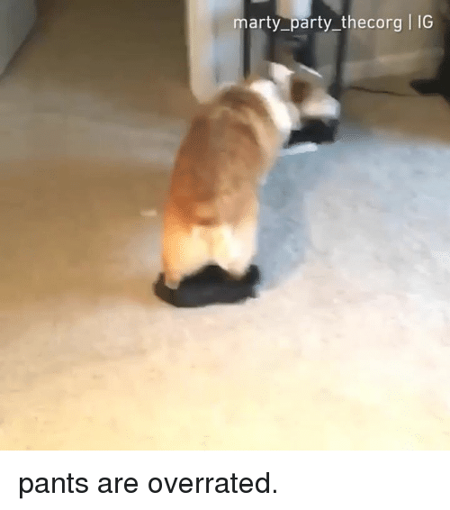 Dank, Party, and Overrated: marty_party thecorg I IG pants are overrated.