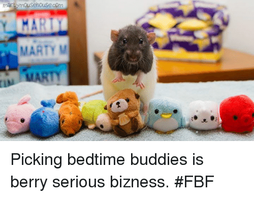 Memes, 🤖, and Com: martymousehouse com  MARTY M Picking bedtime buddies is berry serious bizness.  #FBF