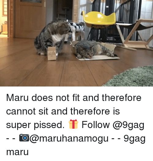 9gag, Memes, and 🤖: Maru does not fit and therefore cannot sit and therefore is super pissed. 🎁 Follow @9gag - - 📷@maruhanamogu - - 9gag maru
