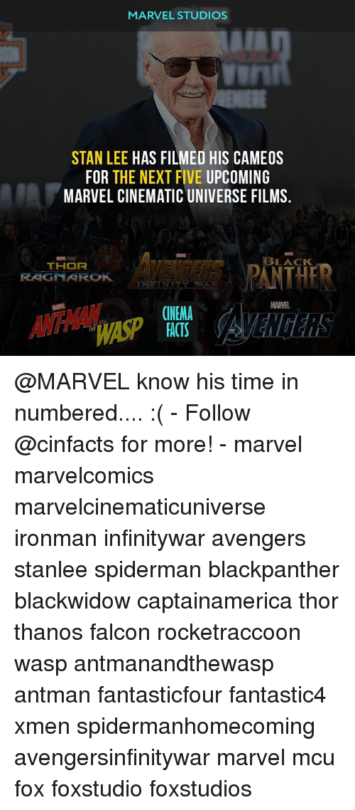 Facts, Memes, and Stan: MARVEL STUDIOS  STAN LEE HAS FILMED HIS CAMEOS  FOR THE NEXT FIVE UPCOMING  MARVEL CINEMATIC UNIVERSE FILMS.  AVENDERS PANTHE  ASP  LACK  RAGNAROK  MARVEL  CINEMA  FACTS  THE @MARVEL know his time in numbered.... :( - Follow @cinfacts for more! - marvel marvelcomics marvelcinematicuniverse ironman infinitywar avengers stanlee spiderman blackpanther blackwidow captainamerica thor thanos falcon rocketraccoon wasp antmanandthewasp antman fantasticfour fantastic4 xmen spidermanhomecoming avengersinfinitywar marvel mcu fox foxstudio foxstudios