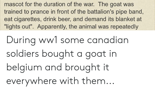"""Apparently, Beer, and Belgium: mascot for the duration of the war. The goat was  trained to prance in front of the battalion's pipe band,  eat cigarettes, drink beer, and demand its blanket at  """"lights out"""". Apparently, the animal was repeatedly During ww1 some canadian soldiers bought a goat in belgium and brought it everywhere with them..."""
