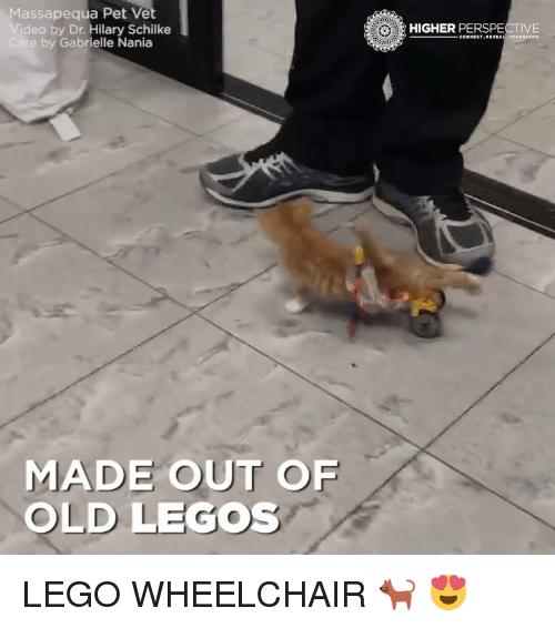 Lego, Memes, and Connected: Massapequa Pet Vet  Video by Dr Hilary Schilke  Care by Gabrielle Nania  MADE OUT OF  OLD LEGOS  HIGHER  PERSPECTIVE  CONNECT REVEAL TRAN LEGO WHEELCHAIR 🐈 😍