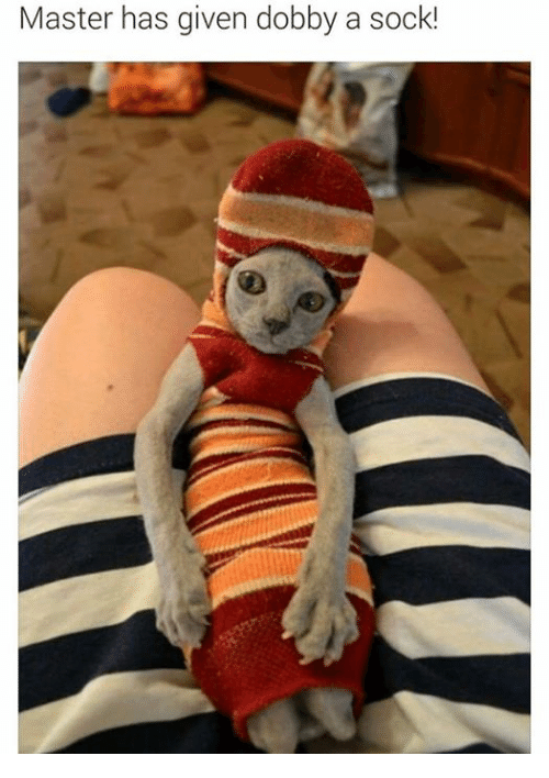 Master Has Given Dobby A Sock
