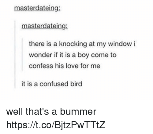 Confused, Love, and Memes: masterdateing:  masterdateing:  there is a knocking at my window i  wonder if it is a boy come to  confess his love for me  it is a confused bird well that's a bummer https://t.co/BjtzPwTTtZ