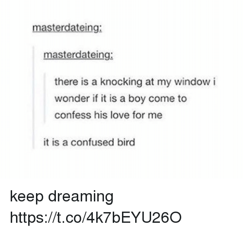 Confused, Love, and Memes: masterdateing:  masterdateing:  there is a knocking at my window i  wonder if it is a boy come to  confess his love for me  it is a confused bird keep dreaming https://t.co/4k7bEYU26O