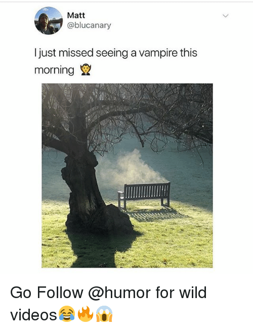 Memes, Videos, and Wild: Matt  @blucanary  Ijust missed seeing a vampire this  morning Go Follow @humor for wild videos😂🔥😱