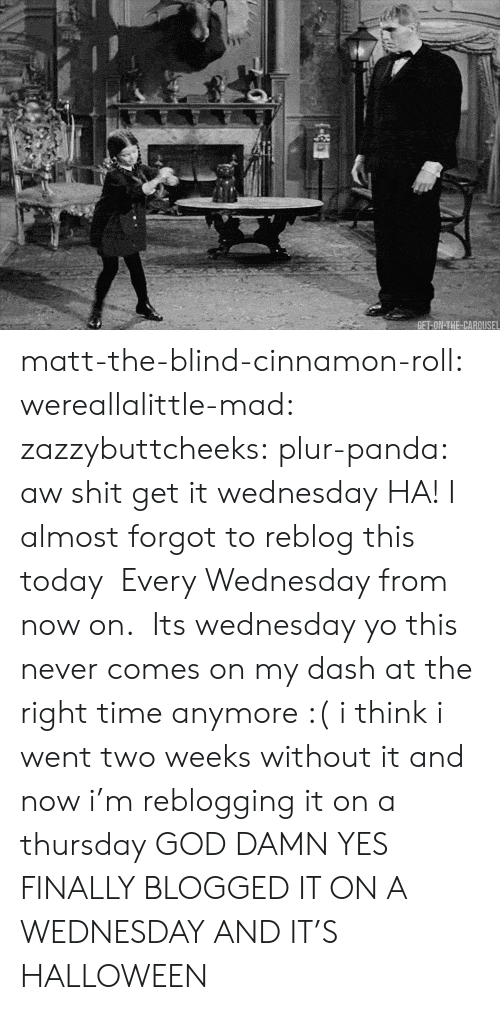 God, Halloween, and Shit: matt-the-blind-cinnamon-roll:  wereallalittle-mad:  zazzybuttcheeks:  plur-panda:      aw shit get it wednesday  HA! I almost forgot to reblog this today   Every Wednesday from now on.   Its wednesday yo   this never comes on my dash at the right time anymore :( i think i went two weeks without it and now i'm reblogging it on a thursday  GOD DAMN YES FINALLY BLOGGED IT ON A WEDNESDAY  AND IT'S HALLOWEEN
