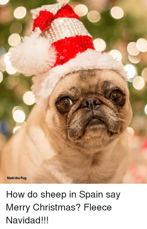 Memes, Merry Christmas, and Pugs: Matti the Pug How do sheep in Spain say Merry Christmas? Fleece Navidad!!!