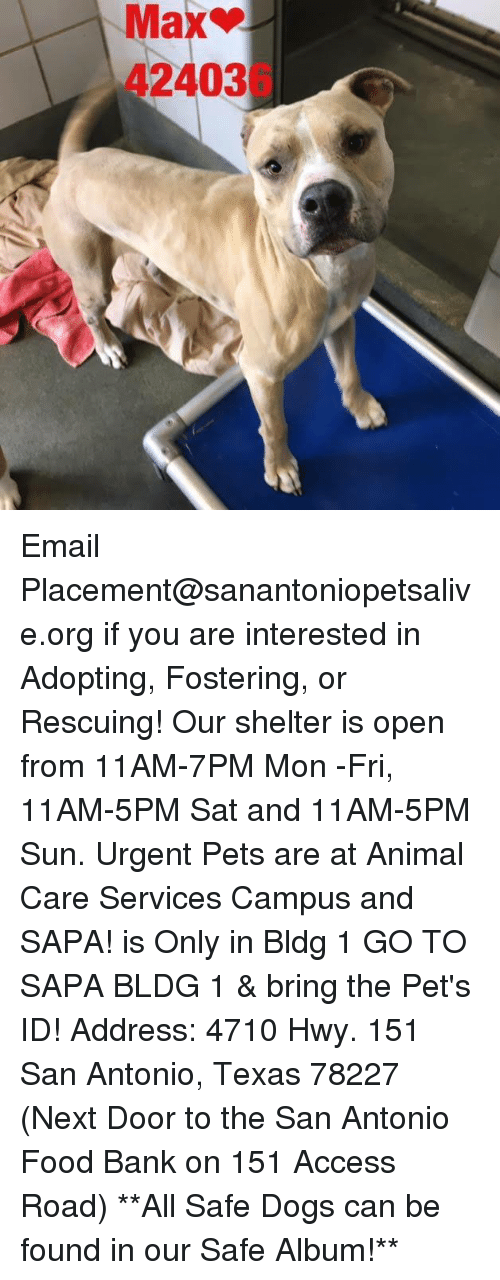 Memes, 🤖, and Sun: Max  42403  L Email Placement@sanantoniopetsalive.org if you are interested in Adopting, Fostering, or Rescuing!  Our shelter is open from 11AM-7PM Mon -Fri, 11AM-5PM Sat and 11AM-5PM Sun.  Urgent Pets are at Animal Care Services Campus and SAPA! is Only in Bldg 1 GO TO SAPA BLDG 1 & bring the Pet's ID! Address: 4710 Hwy. 151 San Antonio, Texas 78227 (Next Door to the San Antonio Food Bank on 151 Access Road)  **All Safe Dogs can be found in our Safe Album!**