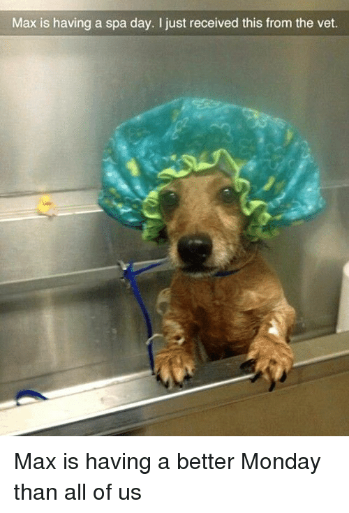 Funny, Monday, and Day: Max is having a spa day. I just received this from the vet. Max is having a better Monday than all of us