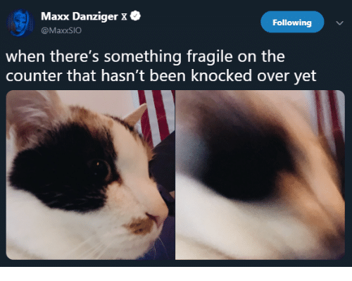 Been, Following, and Maxx: Maxx Danziger X .  @MaxxSIO  Following  when there's something fragile on the  counter that hasn't been knocked over yet