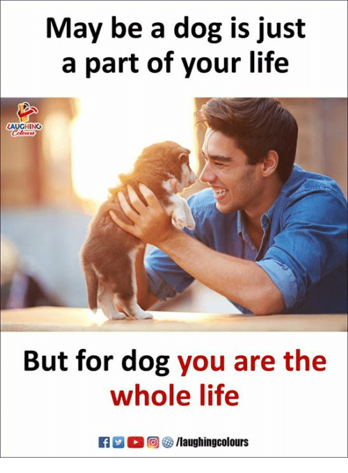 Life, Indianpeoplefacebook, and Dog: May be a dog is just  a part of your life  But for dog you are the  whole life