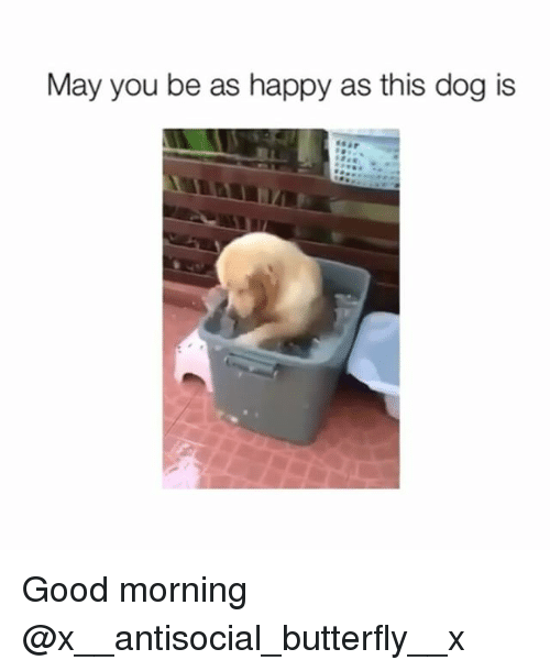 Funny, Butterfly, and Antisocial: May you be as happy as this dog is Good morning @x__antisocial_butterfly__x