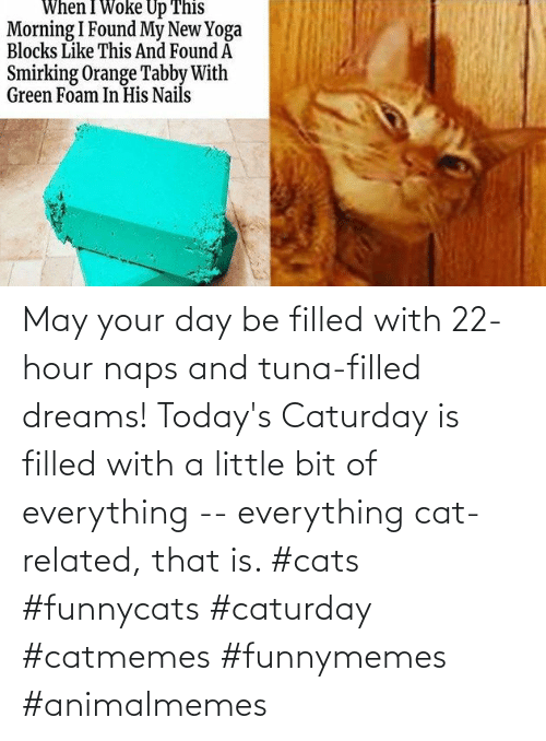 Cats, Caturday, and Dreams: May your day be filled with 22-hour naps and tuna-filled dreams! Today's Caturday is filled with a little bit of everything -- everything cat-related, that is. #cats #funnycats #caturday #catmemes #funnymemes #animalmemes