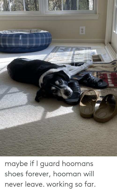 Shoes, Forever, and Never: maybe if I guard hoomans shoes forever, hooman will never leave. working so far.