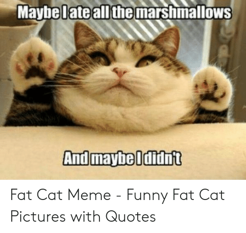 Maybel Marshimallows Ateall the Fat Cat Meme - Funny Fat Cat ...