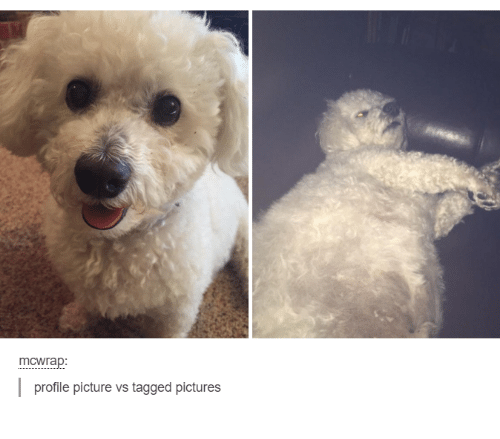 Pictures, Tagged, and Girl Memes: mCWrap:  l profile picture vs tagged pictures