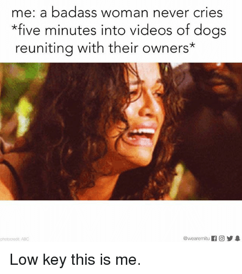 Dogs, Low Key, and Memes: me: a badass woman never cries  *five minutes into videos of dogs  reuniting with their owners Low key this is me.