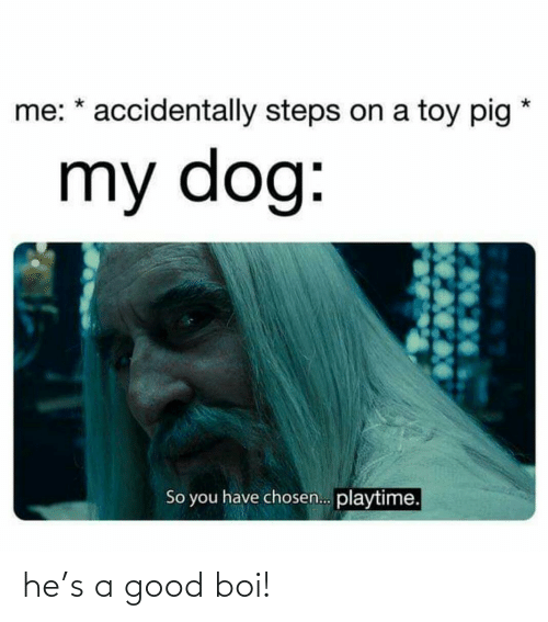 Good, Boi, and Dog: me: * accidentally steps on a toy pig  my dog:  So you have chosen. playtime. he's a good boi!