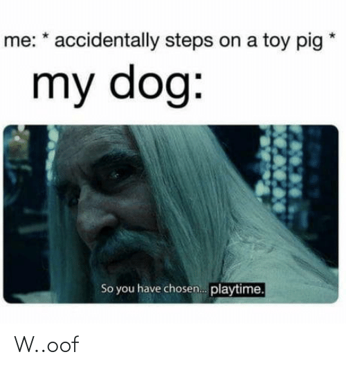 Dog, Pig, and Chosen: me: * accidentally steps on a toy pig  my dog:  So you have chosen. playtime. W..oof
