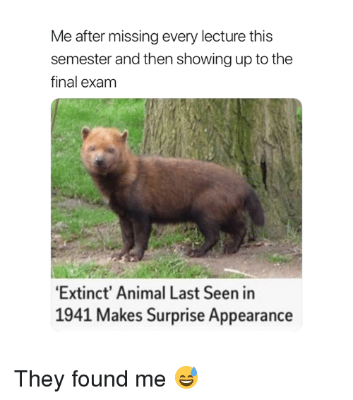 Animal, They, and Final: Me after missing every lecture this  semester and then showing up to the  final exam  Extinct' Animal Last Seen in  1941 Makes Surprise Appearance They found me 😅