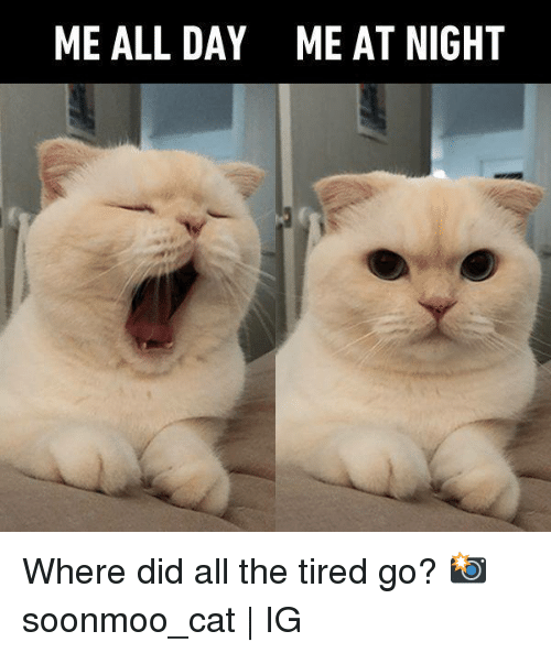 Dank, All The, and 🤖: ME ALL DAY  ME AT NIGHT Where did all the tired go?  📸 soonmoo_cat   IG