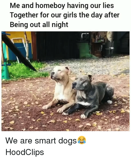 Dogs, Funny, and Girls: Me and homeboy having our lies  Together for our girls the day after  Being out all night We are smart dogs😂 HoodClips