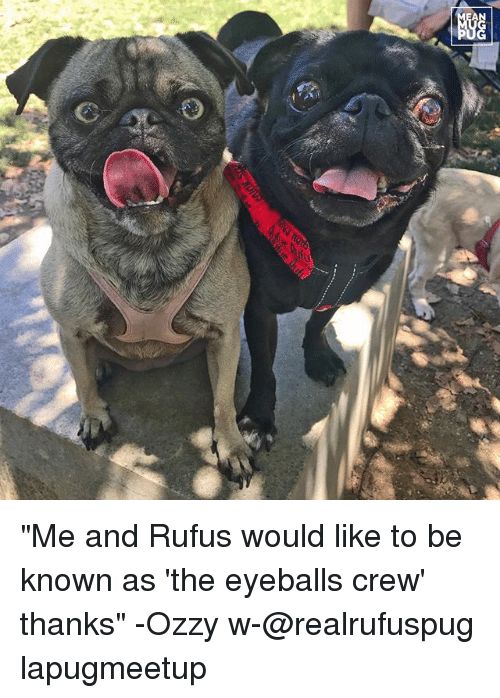 """Memes, 🤖, and Ozzy: """"Me and Rufus would like to be known as 'the eyeballs crew' thanks"""" -Ozzy w-@realrufuspug lapugmeetup"""