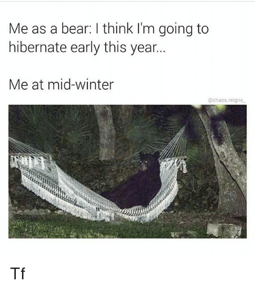 Memes, Winter, and Bear: Me as a bear: think I'm going to  hibernate early this year...  Me at mid-winter  @chaos reigns Tf