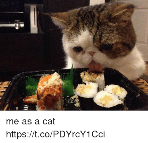 Girl Memes, Cat, and  a Cat: me as a cat https://t.co/PDYrcY1Cci