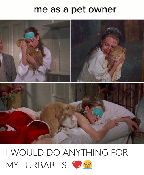Memes, 🤖, and Pet: me as a pet owner I WOULD DO ANYTHING FOR MY FURBABIES. 💖😭